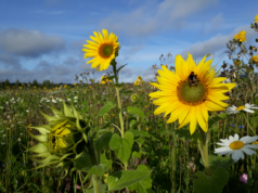 Pikkolan maisemapelto syyskuussa 2020. Kuva: Kangasalan kaupunki
