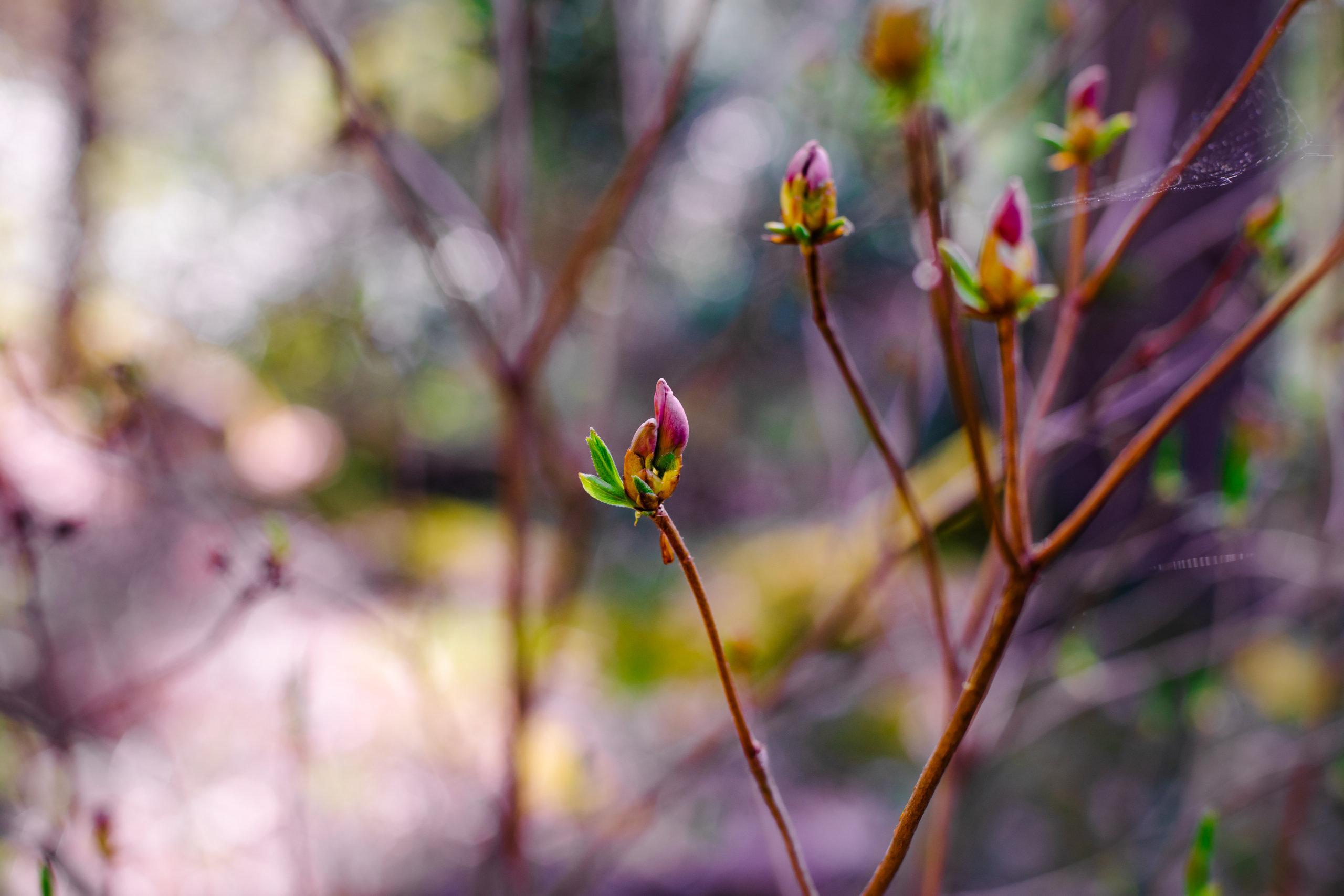 3,2 hehtaarin puutarhassa kasvaa sadoittain eri lajien puita ja pensaita. Mystisen kauneuden ja tunnelman aistii vain paikan päällä. Kuva: Visit Kangasala, Tiia Ennala