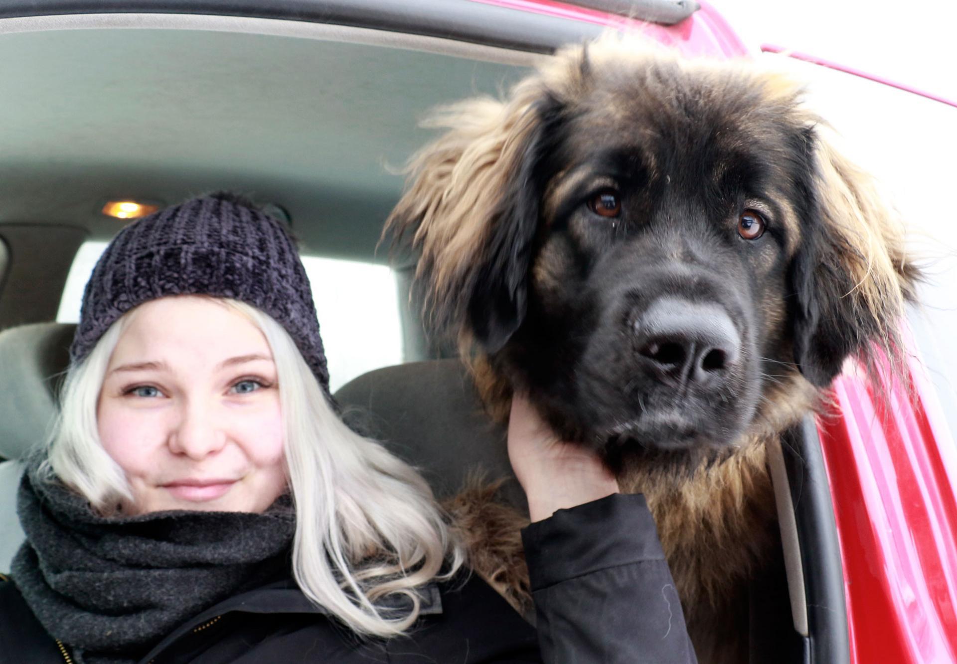 Jenni Lemio suunnittelee aloittavansa vesipelastustreenit Isla-koiransa kanssa.