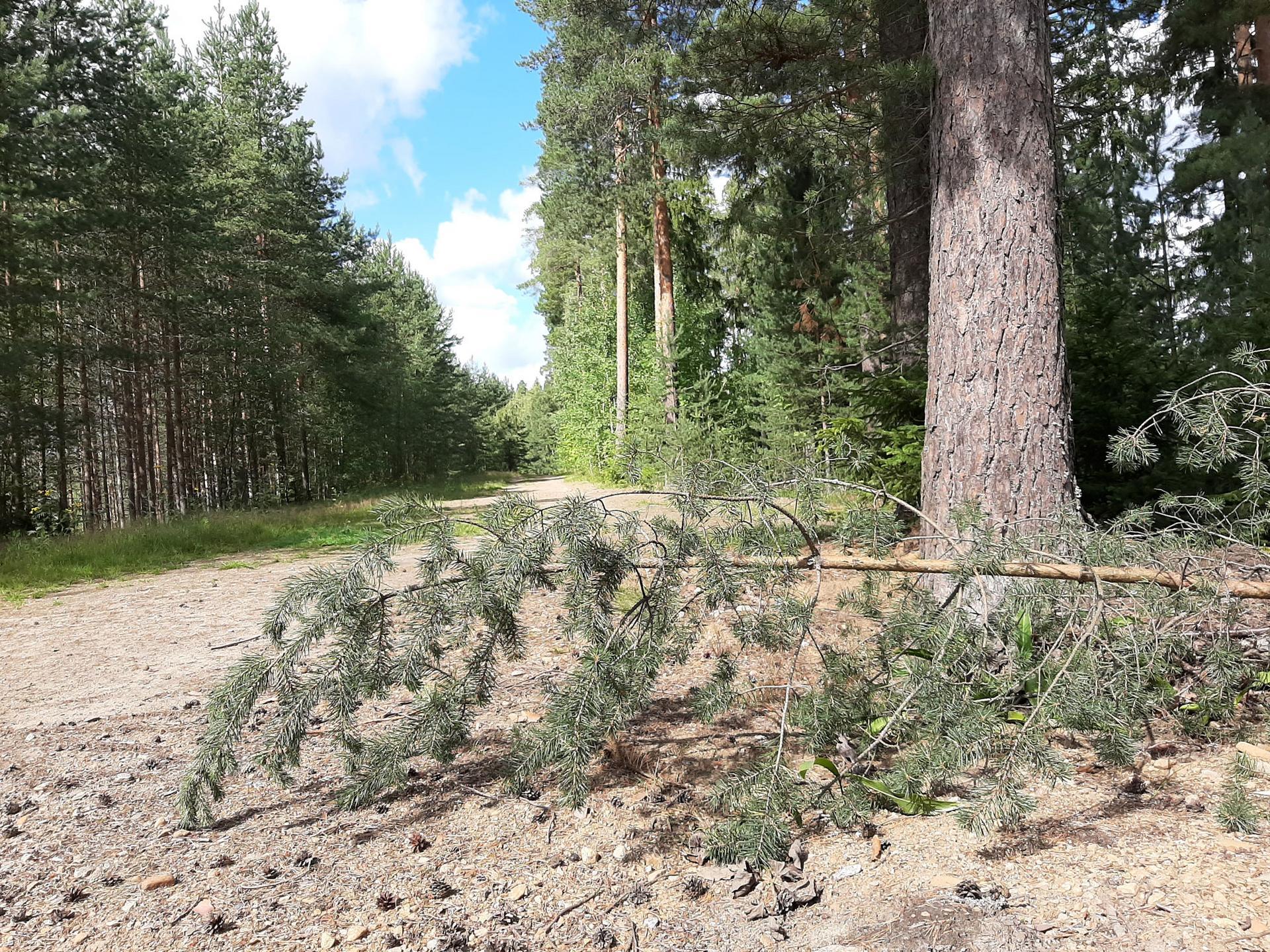 Metsänhoitotyöt Sorolan montun alueella ovat jo alkaneet.