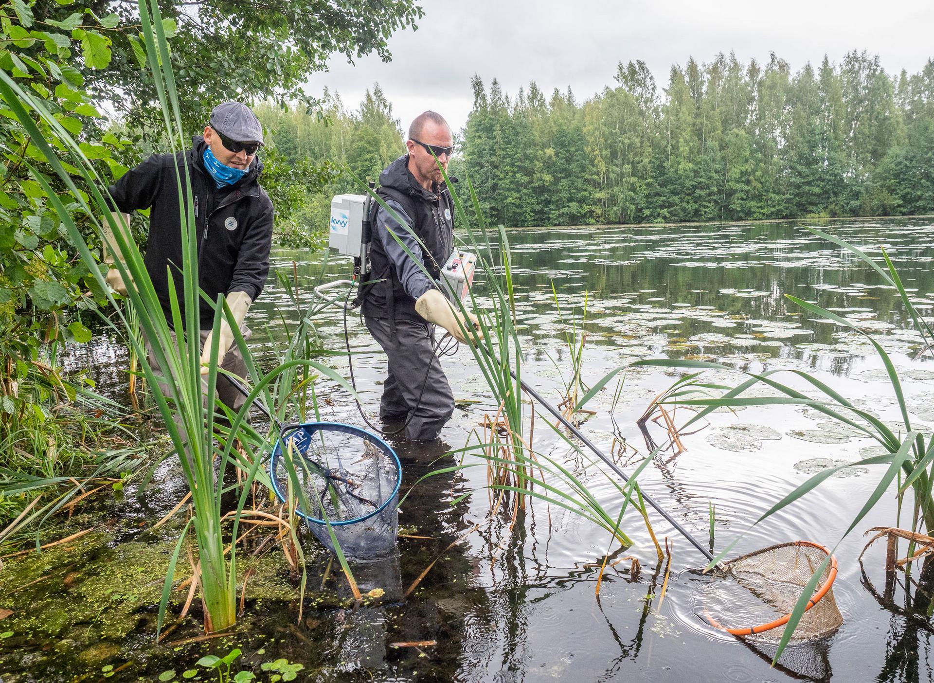 Kalastotutkija Ari Westermark ja iktyonomi Marko Nieminen tekivät sähkökoekalastusta Kuohunlahden rantavesissä. Niemisen käyttämä laitteisto muodostaa veteen sähkökentän, joka tainnuttaa lähellä olevat kalat lyhyeksi aikaa. Westermark siirsi kalat haavillaan rannalla odottavaan vesiastiaan.