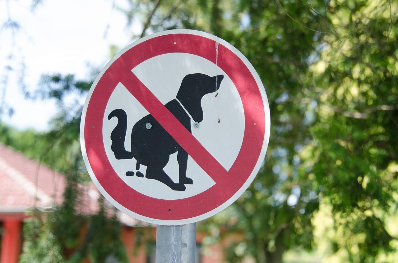 Tällä viikolla tekstareissa muun muassa moititaan koiranomistajien laiskuutta kerätä lemmikkiensä jätöksiä, kaivataan levähdyspenkkejä kauppoihin ja syytetään Lentopalloliittoa väärän päätöksen tekemisestä. Kuva: Pixabay