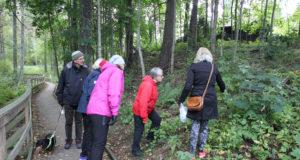 Kävelijäjoukko tarkastelee Kuohunlahden kasvillisuutta Katri Tolosen johdolla.