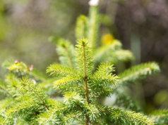 Saarenmaan alueella raivataan metsää 30,8 hehtaarin alueella.