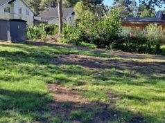 Muuttuiko puistikko parkkipaikaksi, lukijamme ihmettelee. Hänen lähettämässään kuvassa näkyy, kuinka sähköjohtokaivanto jätti jälkeensä tuhotun nurmikon ja kasan katkenneita tammenoksia. Hän kertoo, että keväällä Myllystenpohjantien vieressä oleva puistikko sai hienon nurmikentän keltavuokoin ja skilloin. Nyt tämä nurmi on lukijamme mielestä täysin tuhottu.