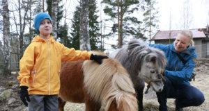 Juuso Tanila ja Heini Niklas-Salminen kävivät tervehtimässä Daisyä ja Lilliä. Miniatyyriponit muuttavat kesäksi Raudanmaan monitoimikeskuksen lasten maatilalle. Niiden lisäksi sinne on tulossa kolme laamaa, yksi alpakka, marsuja, kalkkunoita ja silkkikanoja.