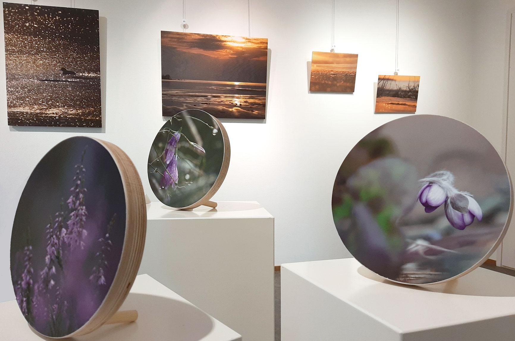 Etualan pyöreät kuvat ovat Katja Tuomalan ottamia, samoin taustalla vasemmalla näkyvä otos telkästä. Muut maisemat ovat Heli Nukin kuvaamia.